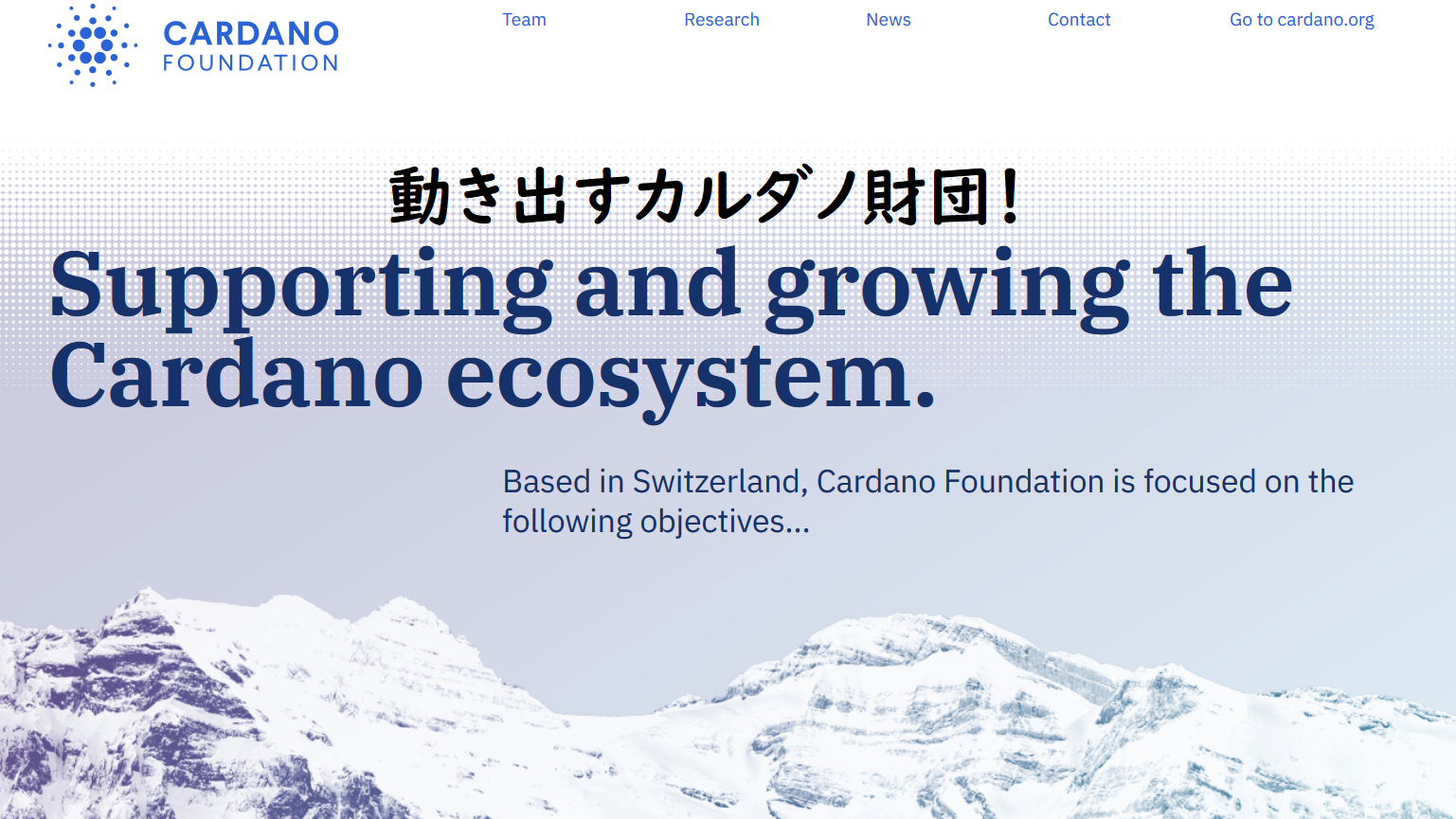 NEW cardanofoundation